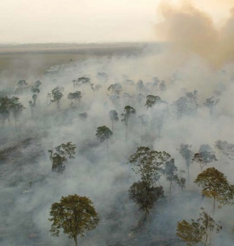 An aerial view of a forest with lots of smoke wafting through.