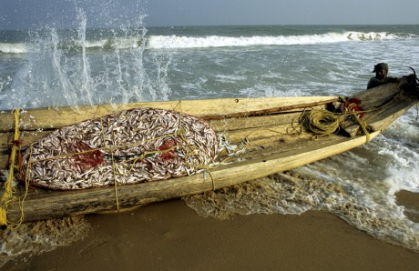 A fisherman in Tamil Nadu returns to shore with his Kattumaram raft and a net bursting with fish