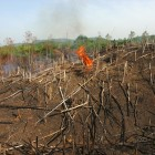Slash and burn methods adopted by farmers have seen swathes of forest in the centre of the country go up in flames to create farmland in Sierra Leone - Fredrik Naumann | Panos Pictures