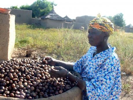 Kaidia processing shea fruit - Soumaila Diarra   Panos London