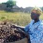 Kaidia processing shea fruit - Soumaila Diarra | Panos London