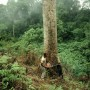 Tree-felling has degraded Nigeria's once-rich forests - Bruce Paton | Panos Pictures