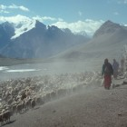 Caring for flocks in the high pastures above Shimshal village, July 2000 - David Butz | Panos London