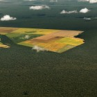 The most dramatic way to see the extent of deforestation in the Amazon rainforest is from the air. | Panos Pictures