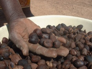 Kaidia shows us some Shea kernels - Soumaila Diarra   Panos London