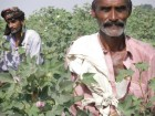 Cotton farmers in the field - Better Cotton Initiative