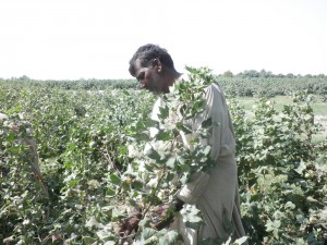 A cotton farmer - Better Cotton Initiative