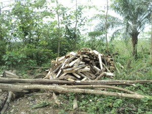 Chopped fuel wood in a portion of the forest reserve in Akasanko - Armsfree Ajanaku | Panos London