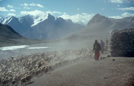 Caring for flocks in the high pastures above Shimshal village, July 2000 - David Butz | Panos London